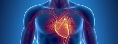 Благоприятное влияние физических упражнений на сердечно-сосудистую систему